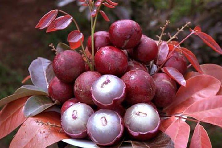 Siêu to khổng lồ hay có màu sắc đặc biệt: 7 loại quả đang trồng ở Việt Nam này tới người Việt chưa chắc đã biết - Ảnh 7.