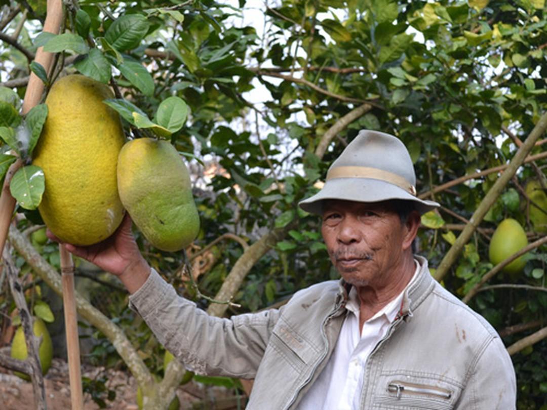 Siêu to khổng lồ hay có màu sắc đặc biệt: 7 loại quả đang trồng ở Việt Nam này tới người Việt chưa chắc đã biết - Ảnh 5.