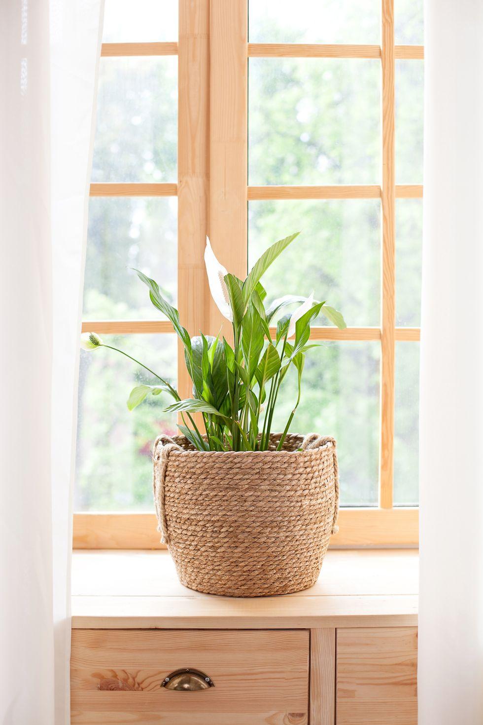 Gợi ý những loại cây tốt nhất có thể trồng trong nhà bếp để làm sáng không gian nhà bạn - Ảnh 4.