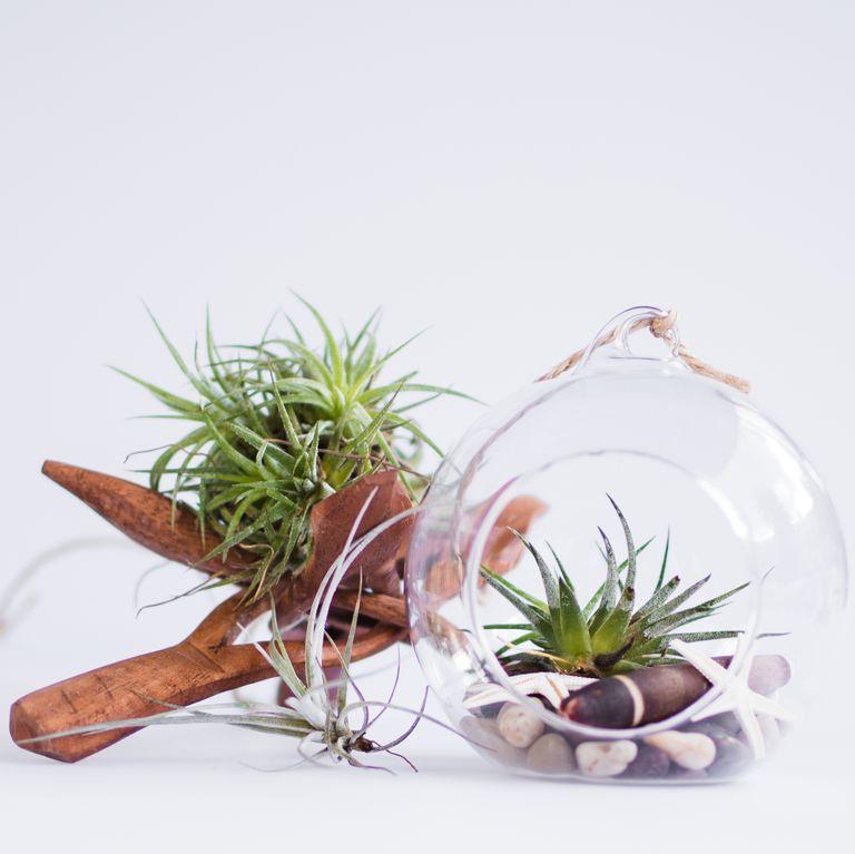 Gợi ý những loại cây tốt nhất có thể trồng trong nhà bếp để làm sáng không gian nhà bạn - Ảnh 5.