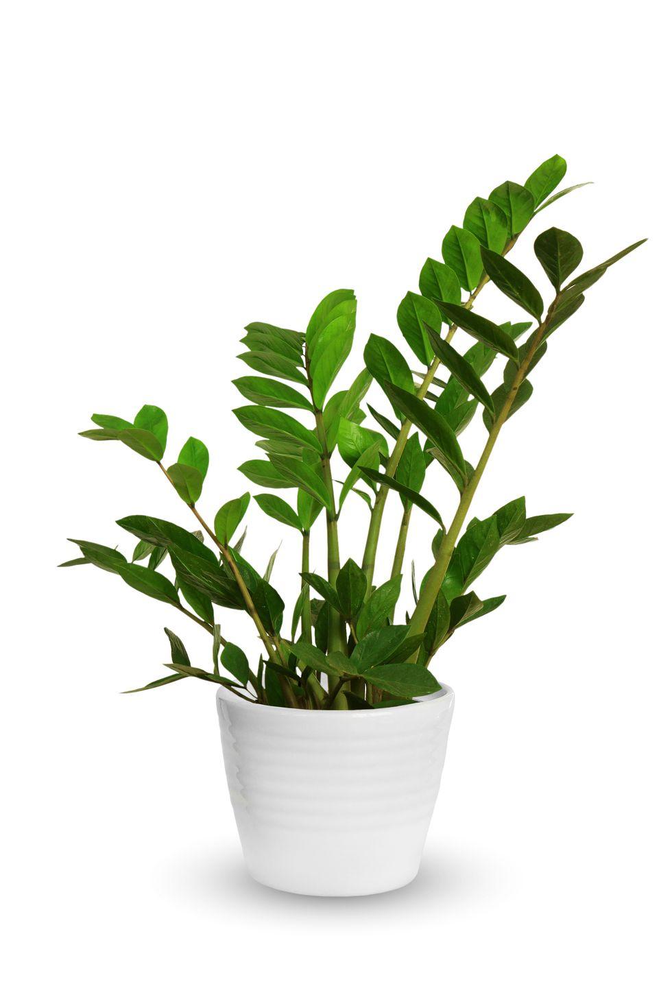 Gợi ý những loại cây tốt nhất có thể trồng trong nhà bếp để làm sáng không gian nhà bạn - Ảnh 7.