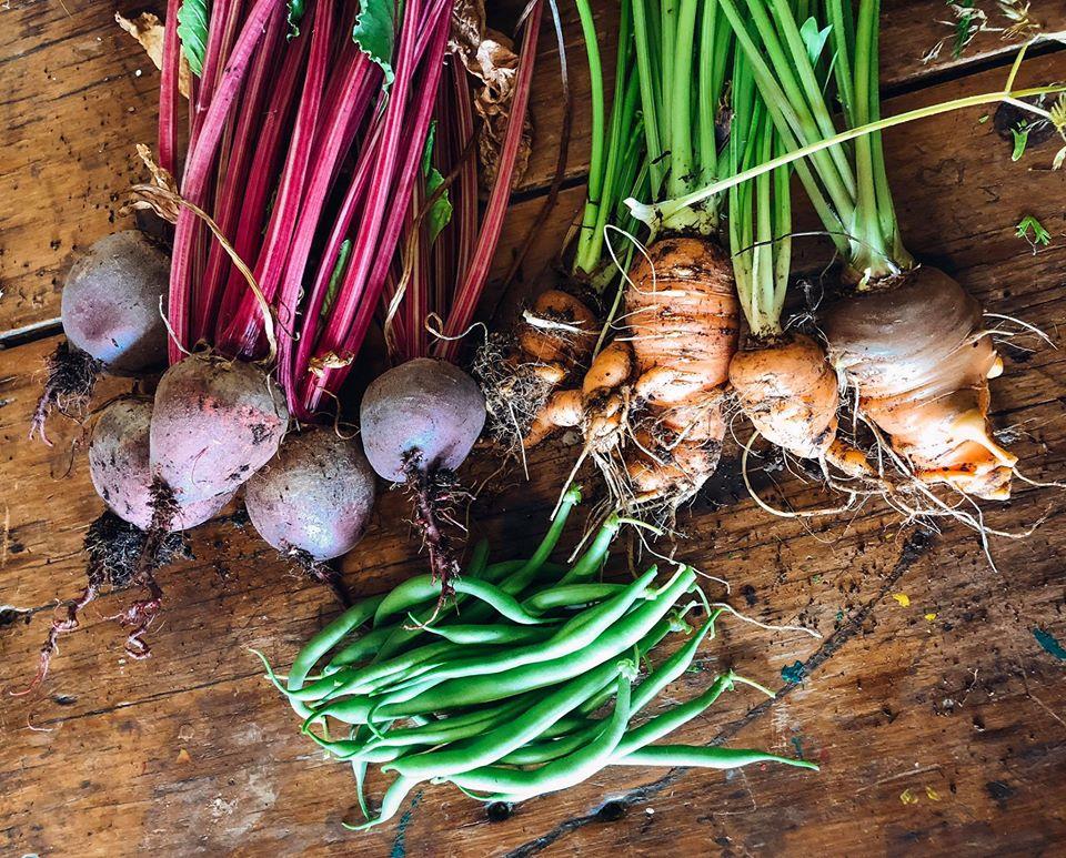Gia đình 7 người trồng rau quả, nuôi gà sạch, sống yên bình ở ngoại ô trong những ngày dịch Covid - 19 - Ảnh 3.