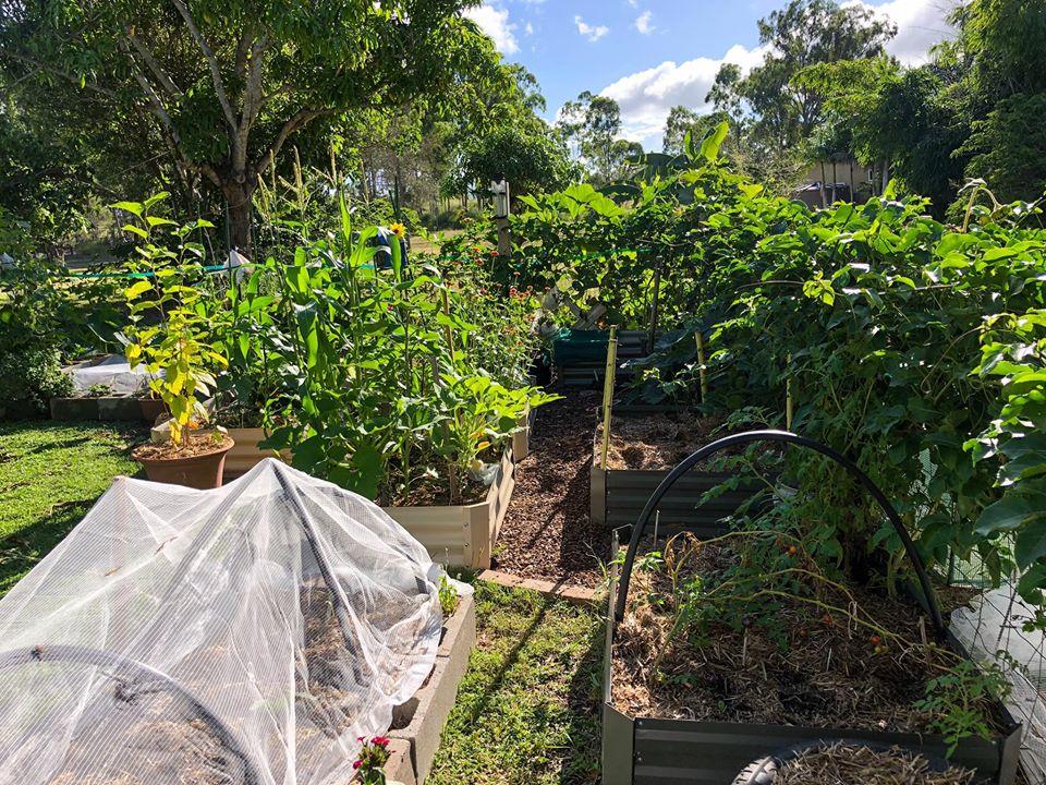 Gia đình 7 người trồng rau quả, nuôi gà sạch, sống yên bình ở ngoại ô trong những ngày dịch Covid - 19 - Ảnh 6.