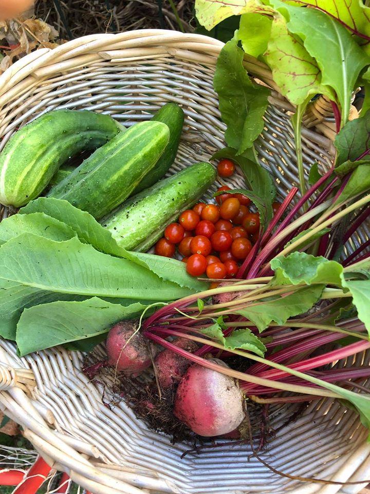 Gia đình 7 người trồng rau quả, nuôi gà sạch, sống yên bình ở ngoại ô trong những ngày dịch Covid - 19 - Ảnh 9.