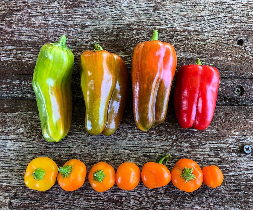 Gia đình 7 người trồng rau quả, nuôi gà sạch, sống yên bình ở ngoại ô trong những ngày dịch Covid - 19 - Ảnh 14.