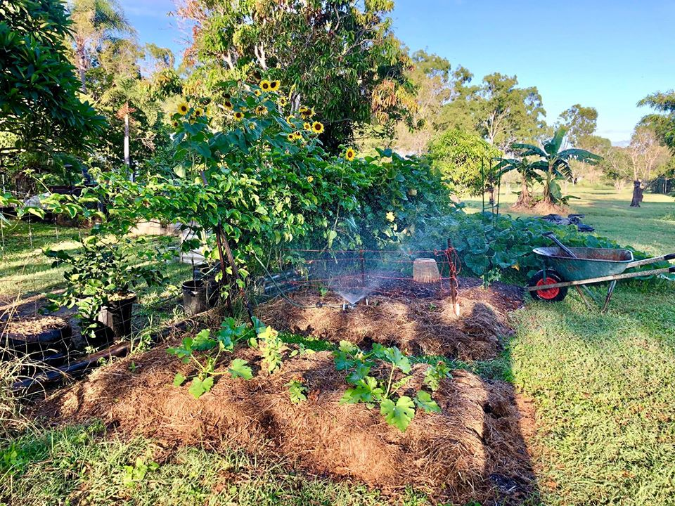 Gia đình 7 người trồng rau quả, nuôi gà sạch, sống yên bình ở ngoại ô trong những ngày dịch Covid - 19 - Ảnh 13.