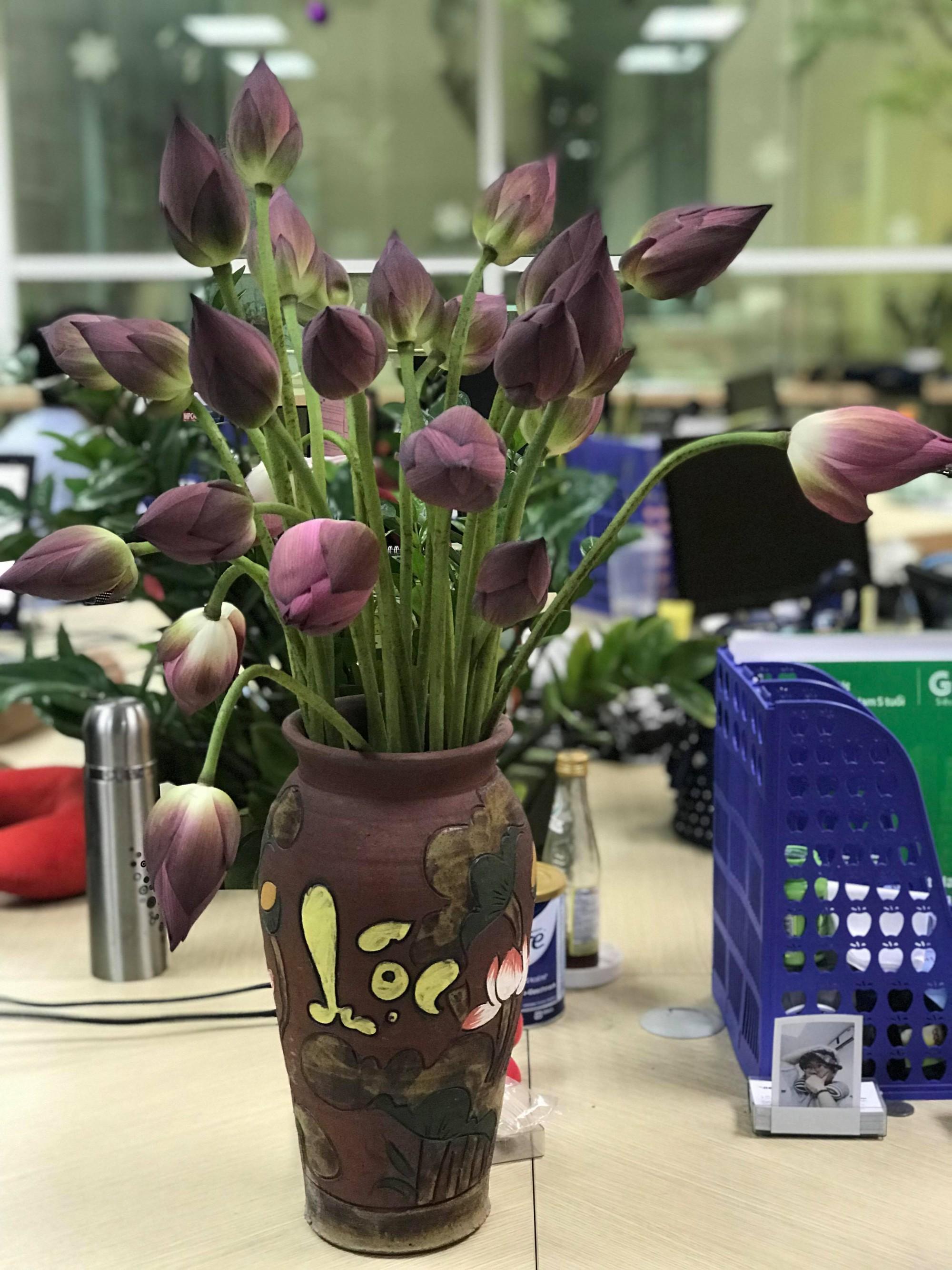Mùa sen về, nếu còn nhầm lẫn tai hại giữa hoa sen & hoa quỳ khi mua, chị em hãy thuộc lòng 7 bí quyết sau! - Ảnh 8.