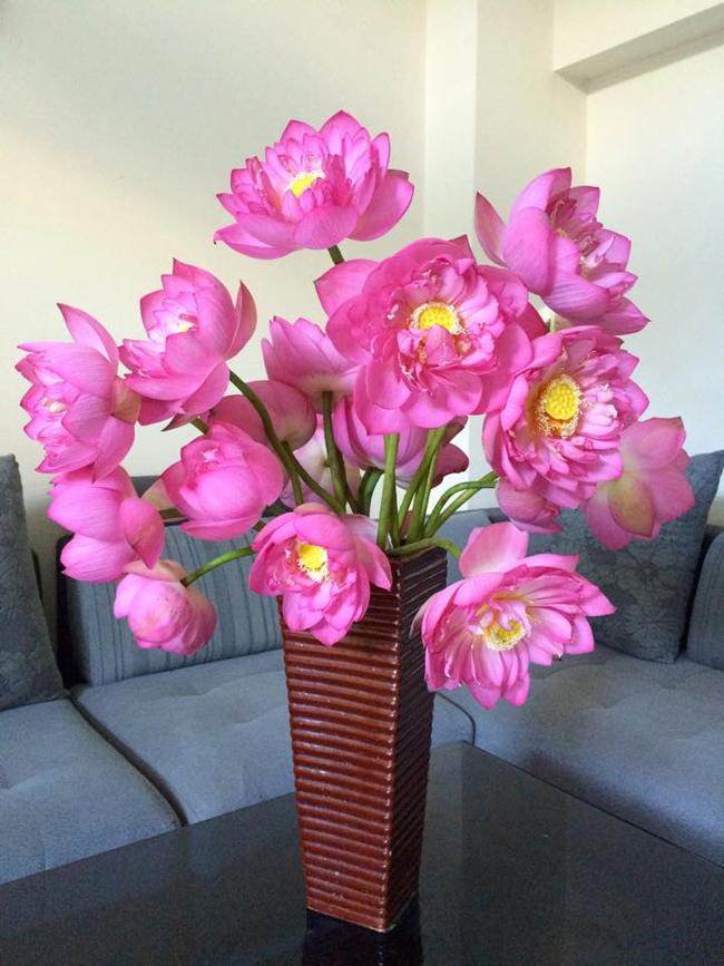 Chị bán hoa chia sẻ 7 bí quyết để chị em phân biệt cực nhanh giữa sen và quỳ để khỏi mua nhầm - Ảnh 8.