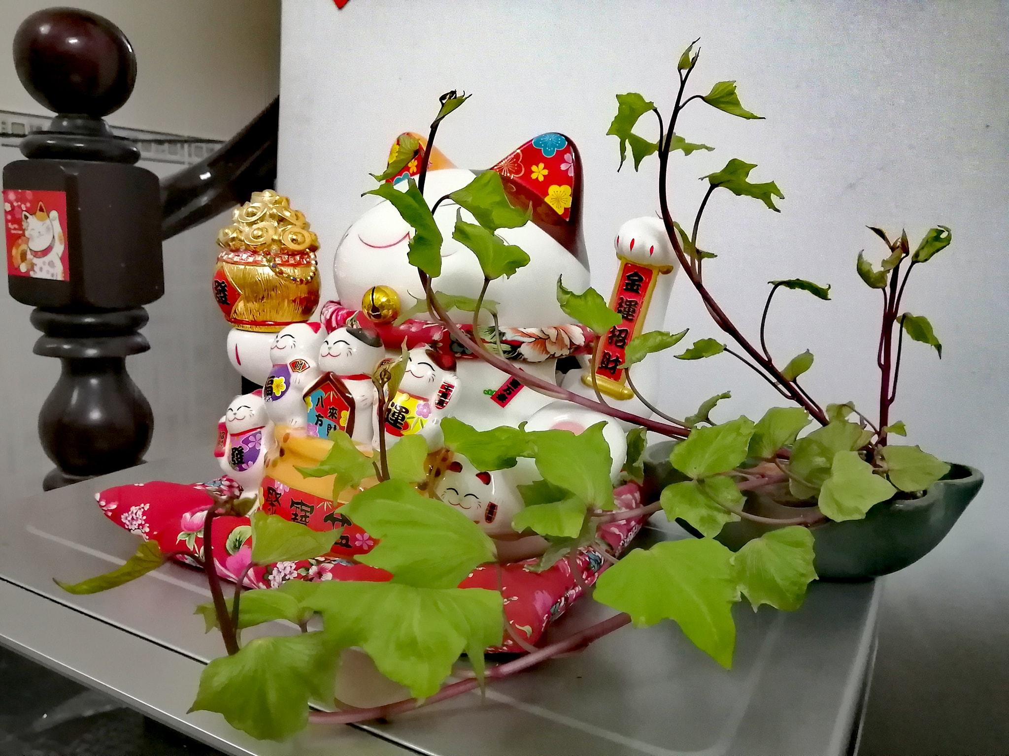 Trồng khoai lang bonsai làm đẹp nhà với các bước dễ vô cùng mà nói ra ai cũng sẽ làm được - Ảnh 5.