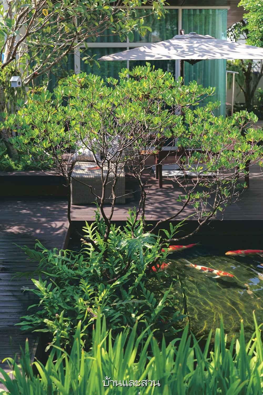 Khu vườn nhiệt đới được cải tạo theo phong cách hiện đại của người đàn ông đã nghỉ hưu - Ảnh 7.