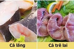 Mẹo phân biệt nhanh cá lăng và cá trê lai đơn giản đến không ngờ
