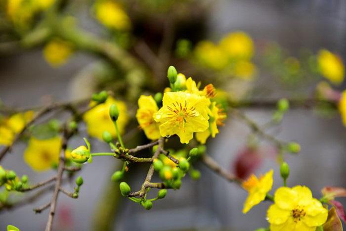 Cuối năm, đặt cây gì trong nhà cho hợp phong thủy ngày Tết ảnh 2