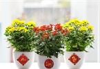 7 loại cây hoa hợp phong thủy không thể thiếu để bày trong nhà ngày Tết
