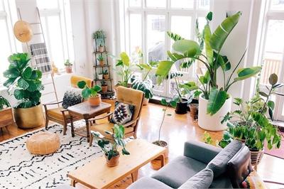 Than thở Hà Nội ô nhiễm chi bằng trồng những loại cây này trong nhà