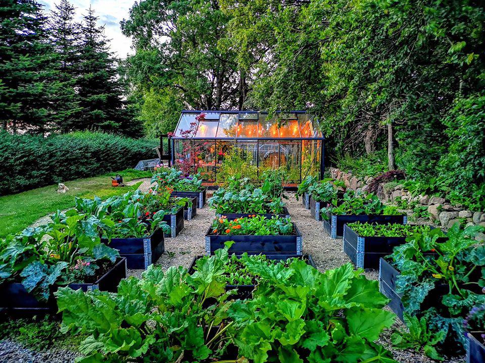Khu vườn đẹp như cổ tích nhờ sở thích trồng cây và hoa của chàng trai trẻ - Ảnh 5.