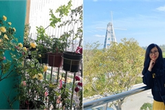 Ban công 3m² phủ kín hoa hồng rực rỡ của mẹ trẻ ở Hà Nội
