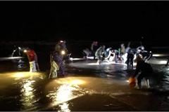 Người dân chong đèn xuyên đêm vớt 'lộc trời' sau mưa bão, kiếm hàng triệu đồng