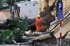 Hà Nội: Cây cổ thụ bật gốc sau trận gió lớn, đè sập tường Tòa án nhân dân tối cao