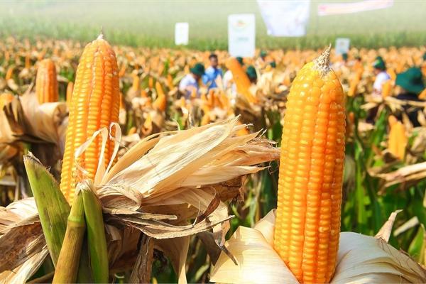 Đóng góp của cây trồng công nghệ sinh học trong nông nghiệp