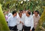 Thủ tướng thăm mô hình nông nghiệp 'trái mùa nghịch vụ' ở thủ phủ trái cây