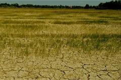 Đẩy mạnh hành động ứng phó biến đổi khí hậu, quản lý tài nguyên và môi trường