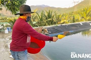 Bỏ nuôi tôm để nuôi loài cá biển này, ông nông dân Đà Nẵng thu tiền tỷ mỗi năm