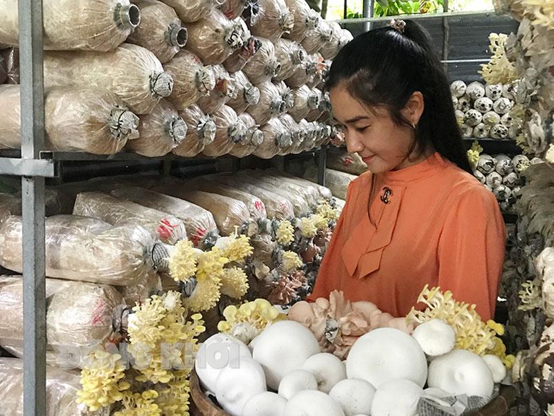 Chị Mai Thị Ánh Xuân thu hoạch nấm sạch.