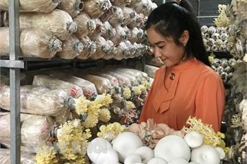 Sở hữu hàng chục nghìn phôi nấm, mỗi tháng bà chủ trại nấm sạch ở Bến Tre thu hàng chục triệu đồng