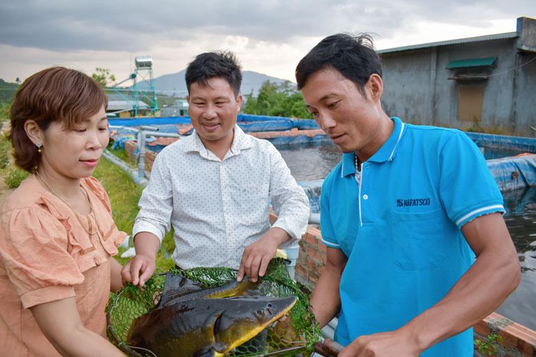 Cá tầm thương phẩm của HTX Nông nghiệp Gia Phát tại xã Rô Men, huyện Đam Rông đạt trọng lượng trung bình 2 kg/con