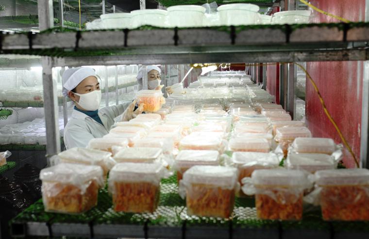 Khách hàng nên lựa chọn những cơ sở có uy tín để mua hàng đông trùng hạ thảo