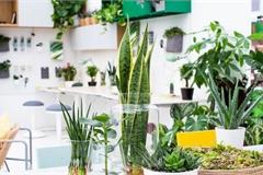 Cây bắt ruồi và các loại cây nên trồng trong nhà bếp