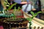 Vườn lan đột biến, hơn 100 loại, giá trị gần 10 tỷ tại vùng hoa Mê Linh