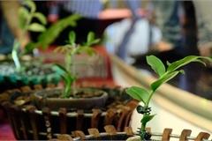 Vườn lan đột biến hơn 100 loại, gần 10 tỷ ở Mê Linh