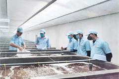 Mạnh dạn đầu tư vào nông nghiệp để thúc đẩy năng lực cạnh tranh