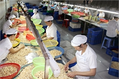 Vietnam's cashew exports to exceed target, says industry