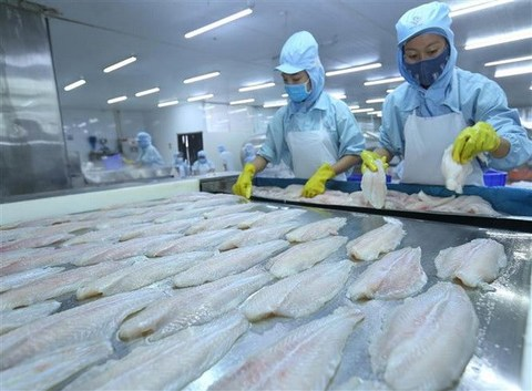 VN seafood exporters floundering due to COVID-19