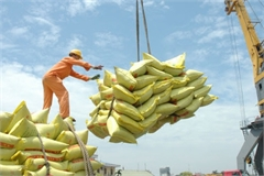 Trade Ministry issues rice export quotas this month under PM permission