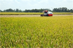 Vietnam Food Association demands priority clearance for rice stuck at ports
