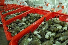 Viet Nam has high shrimp export growth to US and Japan in Q1