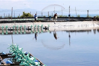 Shrimp exports expected to increase in coming months