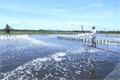 Vietnam shrimp exports to surge as demand increases