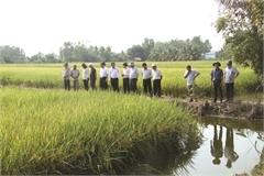 'Nature - based' farming a winner in Mekong Delta