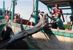 Vietnamcould loseUS$480 million per year due to illegal fishing