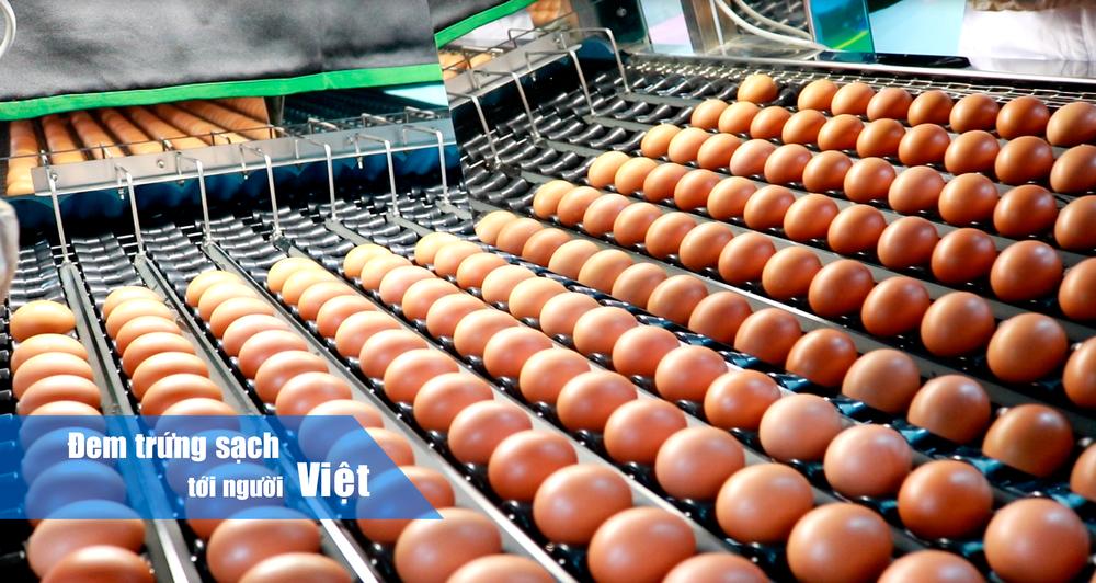 Bức tranh trái ngược của 2 đại gia trứng cùng thời: Vua thép Hòa Phát dội bom thị trường, ĐTK Phú Thọ phá sản - Ảnh 1.