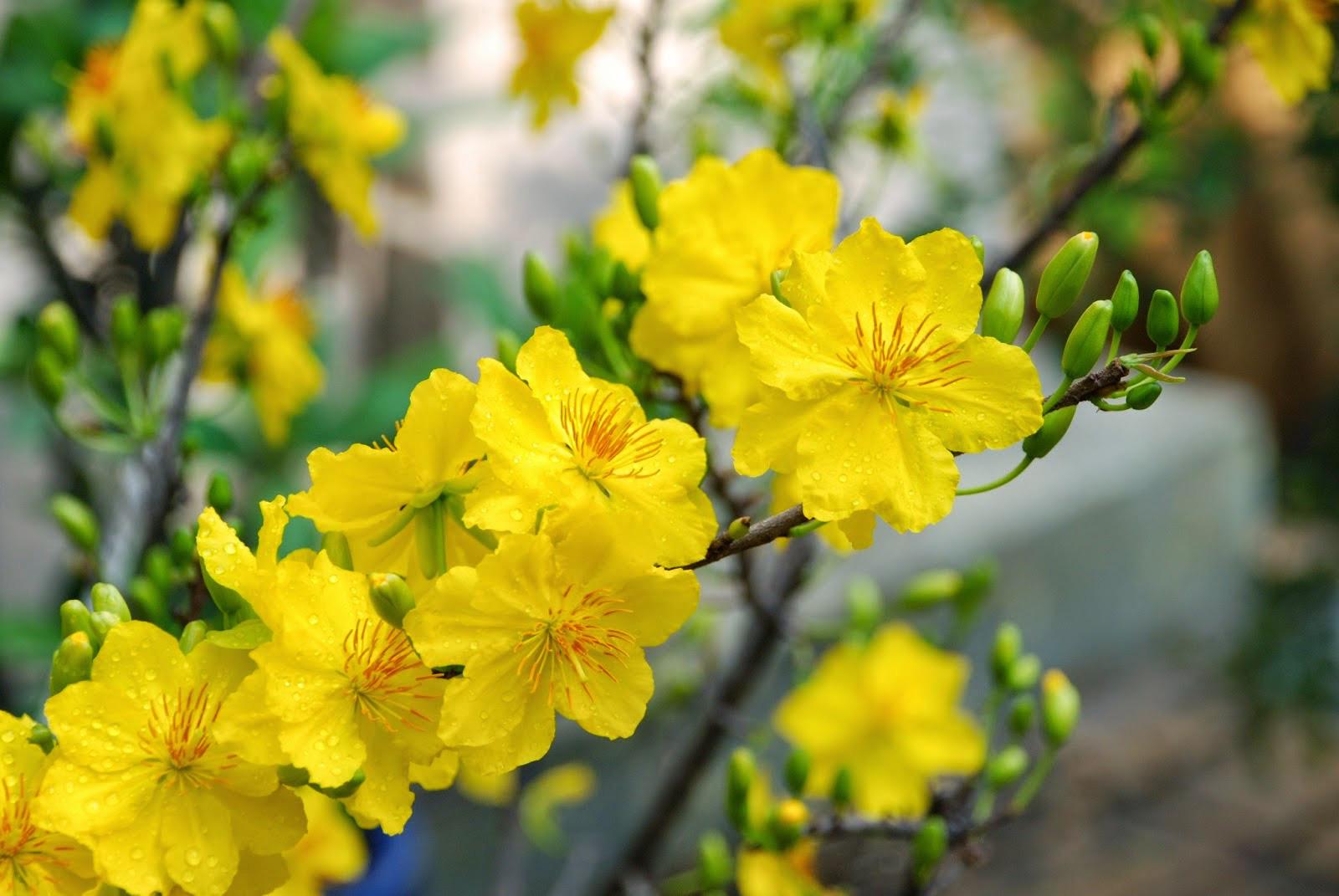 Những cây hoa hợp phong thủy không thể thiếu trong nhà ngày Tết - Ảnh 4.