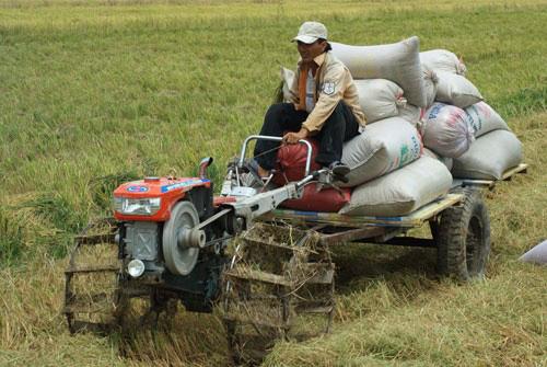 Gạo Việt tăng giá, nông dân phấn khởi - Ảnh 1.