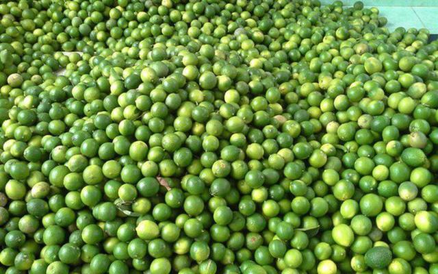 Chanh ta vào mùa, giá rẻ giật mình chỉ 10 ngàn/kg bán đầy các chợ - Ảnh 1.