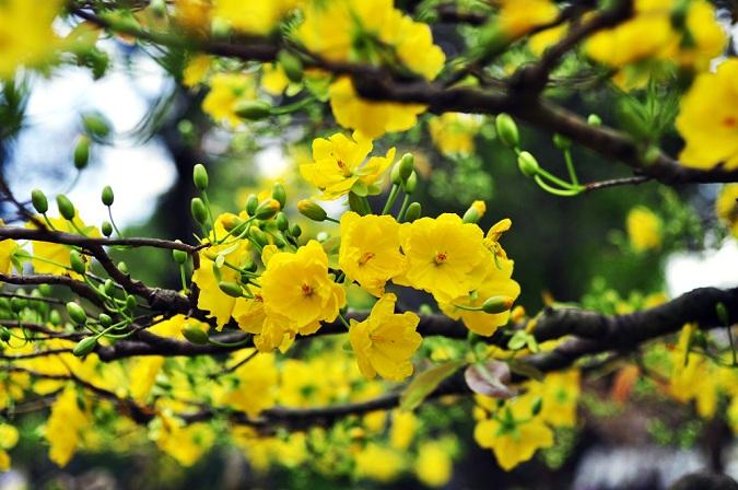 Những loài hoa trưng Tết mang vượng khí rước tài lộc vào nhà - Ảnh 2.