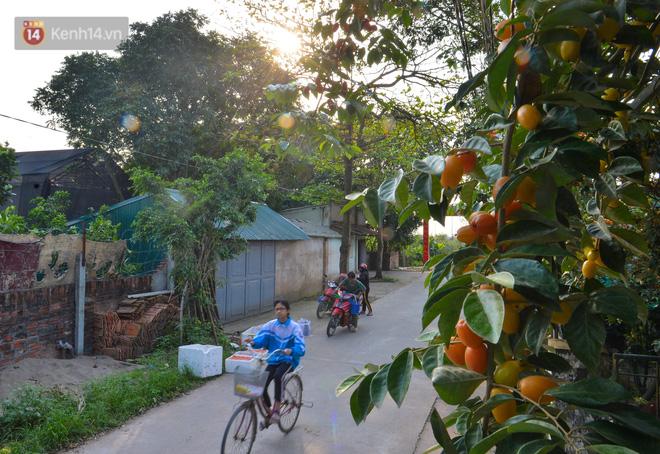 """Mùa nhót chín đỏ ở Hà Nội: Nông dân """"ngại"""" ra vườn, thương lái buồn chán vì hàng không bán được - Ảnh 16."""