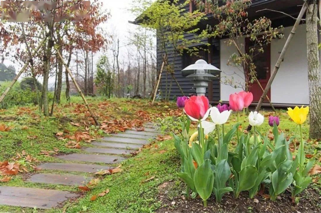 Bỏ phố về vùng nông thôn, gia đình 5 người biến cuộc sống trong ngôi nhà gỗ thành thiên đường ai cũng ước mơ - Ảnh 13.